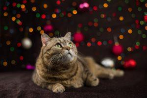 Katzenverhalten lernen auch wenn sich Katzen streiten ist es meistens ein nomales Verhalten zwischen den Tieren